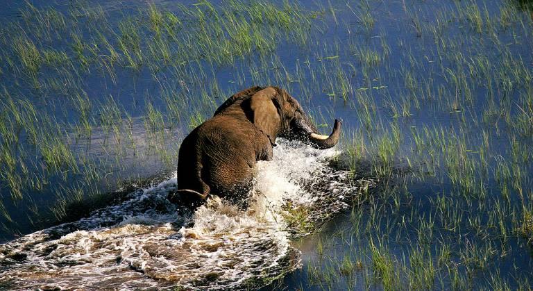 Elefante en Delta del Okavango