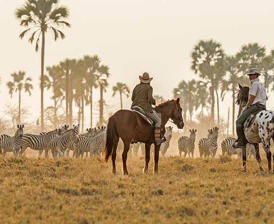 Botswana in Style. Safari en Botswana - The Indiana Travel Experiences