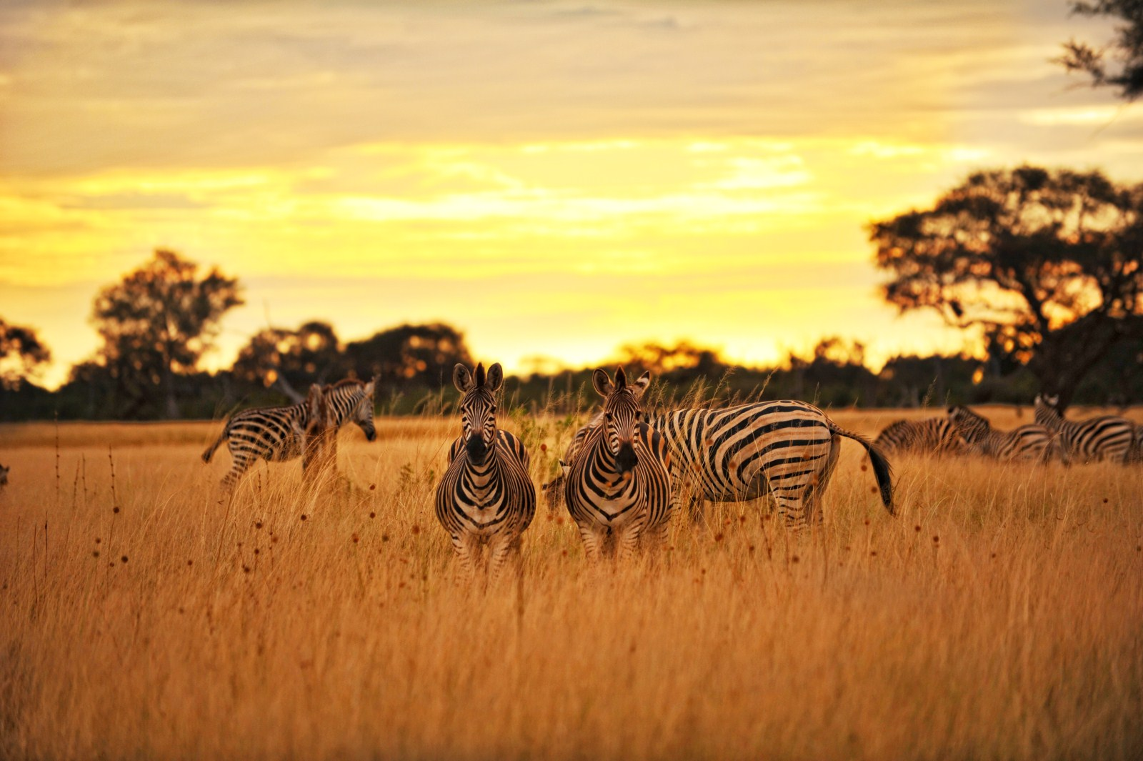 Hwange - Zimbabwe - THE INDIANA TRAVEL