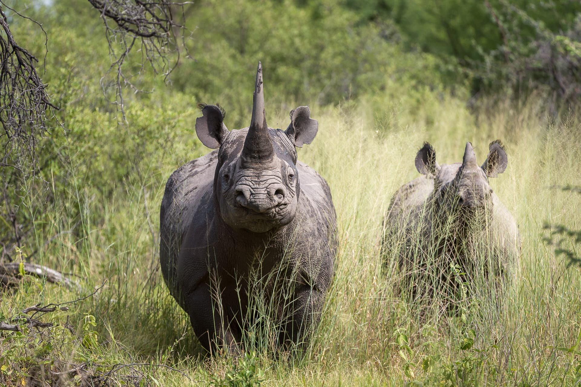 Safari África - Rinocerontes - The Indiana Travel